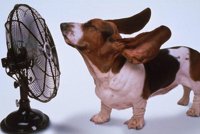funny-dog-photos