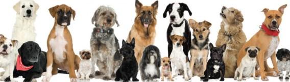 cropped-dog-adoption