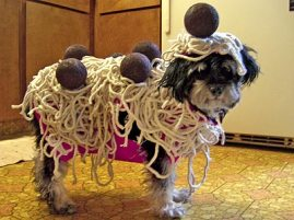 dog_pasta