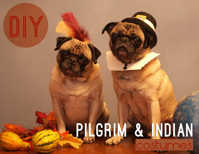 Diy destination pilgrim and indian pet costume the barkington post how cute is this pilgrim and indian costume set now you can make it yourself and dress up your pooch in the spirit of thanksgiving solutioingenieria Choice Image