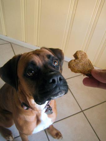 www.delish-blog.com-pumpkin-peanut-butter-dog-treats