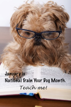 National-train-your-dog-month-Oxana-Oleynichenko