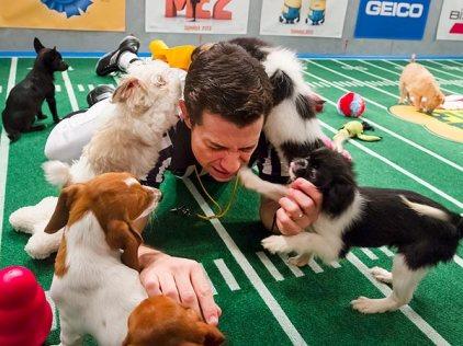 http://barkpost.com/wp-content/uploads/2014/01/puppy-bowl-2-600.jpg
