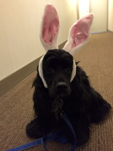 Bronx bunny