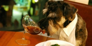Featured-Image-dog-friendly-restaurants-Pitts-750x375