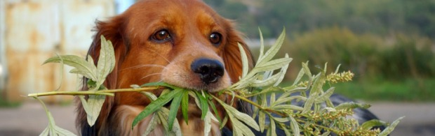 http://sierracanine.com/wp-content/uploads/2011/03/food-plants-toxic-to-dogs.jpg