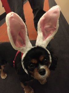 Sadie bunny