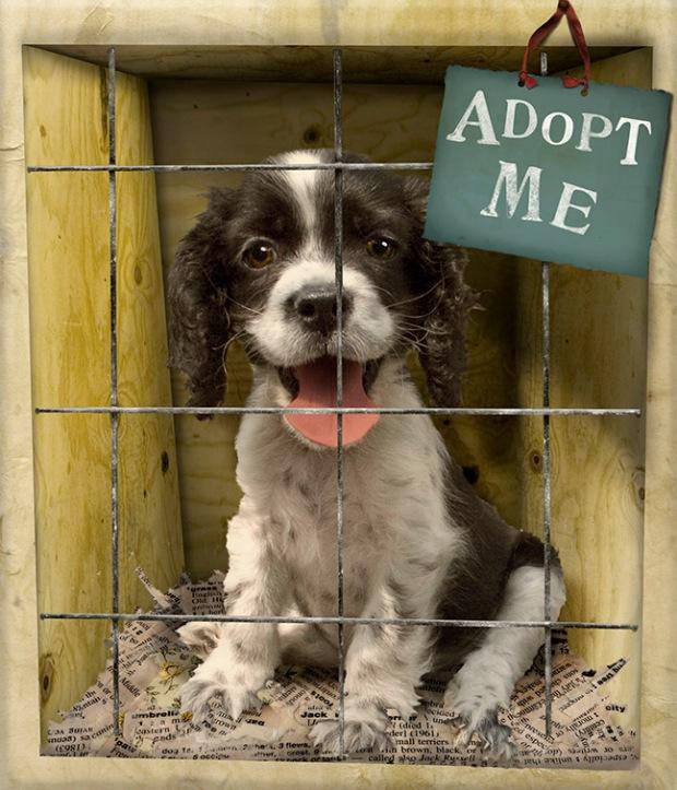 http://blog.hartz.com/october-is-adopt-a-shelter-dog-month/