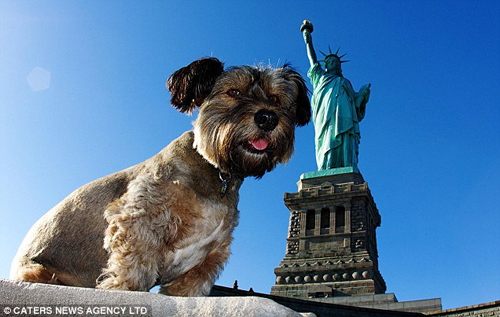 oscar-dog-new-york