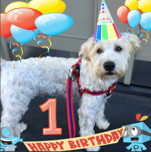 Happy Birthday Quinn!