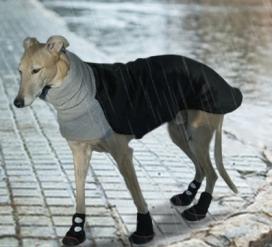 dog-walking-in-rain-boots
