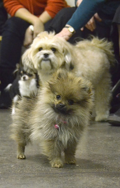 Small Dog Meet Up Group
