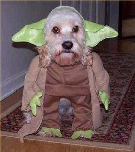 dog-yoda-halloween-costume
