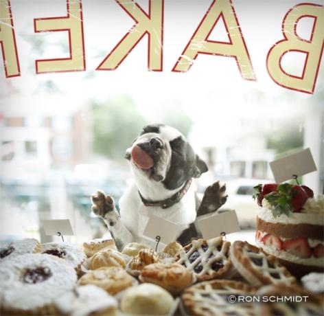 biscuit-ronschmidt