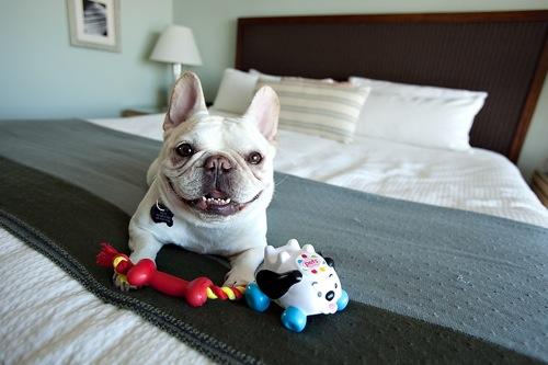 pet-friendly-hotels
