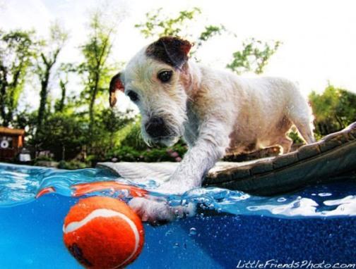 Underwater_Dogs_by_Seth_Casteel_13