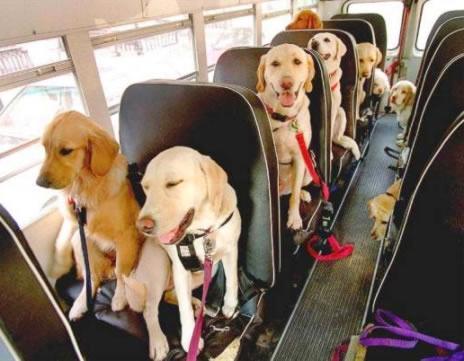 15056-dog_school