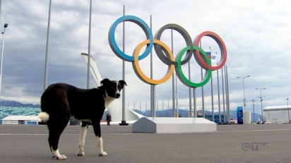 strays-in-sochi