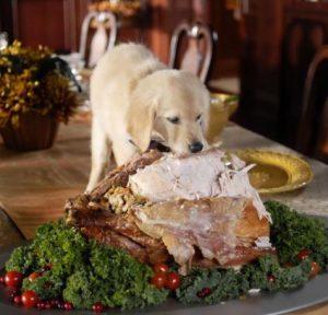 thanksgiving-dog-dinner-1