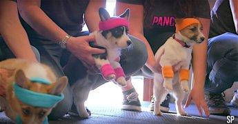 gym-puppies-screenshot-soulpancake