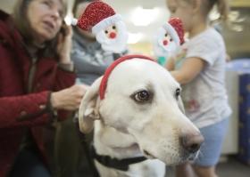699293-dogs-visit-shelter2