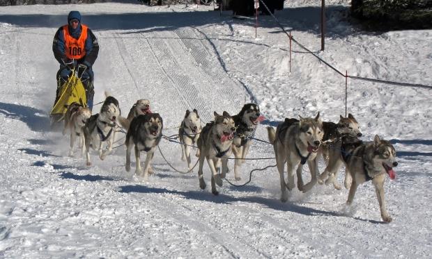 frauenwald_hundeschlittenrennen_6