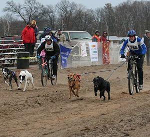 start_of_a_bikejoring_race