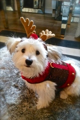 Ollie (Rudolph)